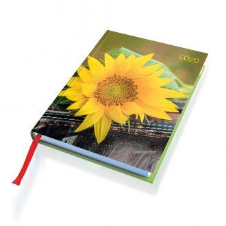 Lady-Timer Sonnenblume